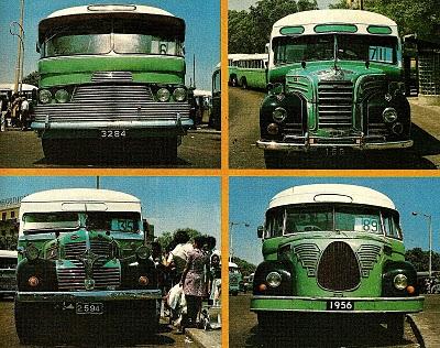 maltese bus x 4